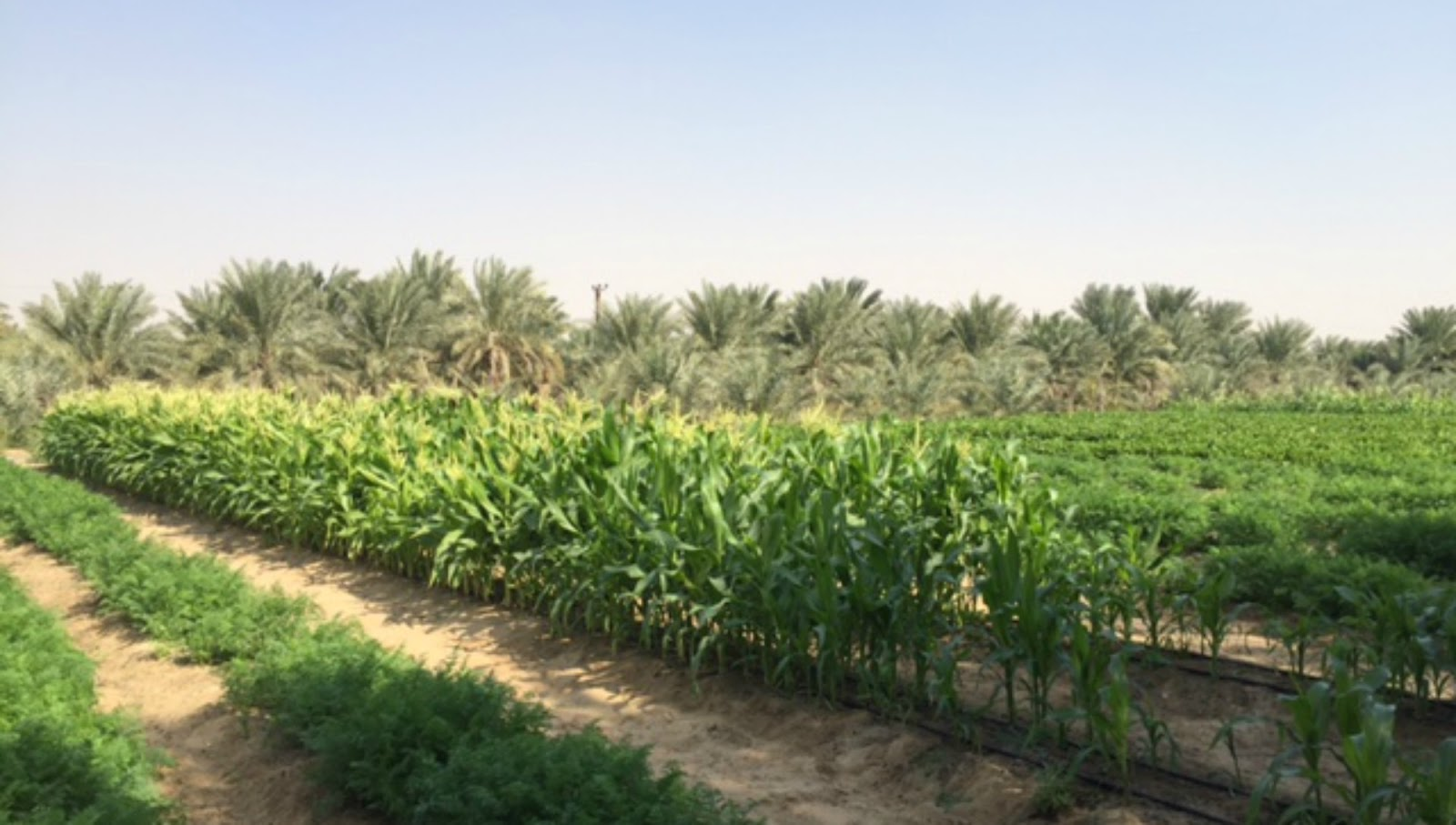 agriculture in the uae 251 economic development in the uae agricultural resources the total area of land under agriculture and forestry constitutes less than 15 per cent of the total land area of the uae.