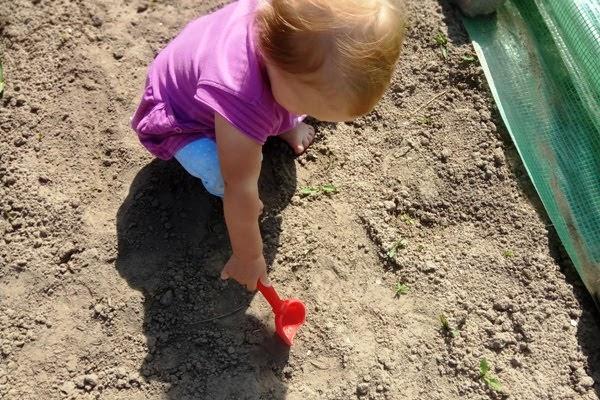 Integracja sensoryczna na podwórku - ogródek warzywny