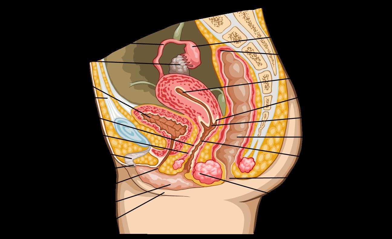 Biologia Y Geologia 3oeso Nervous Endocrine