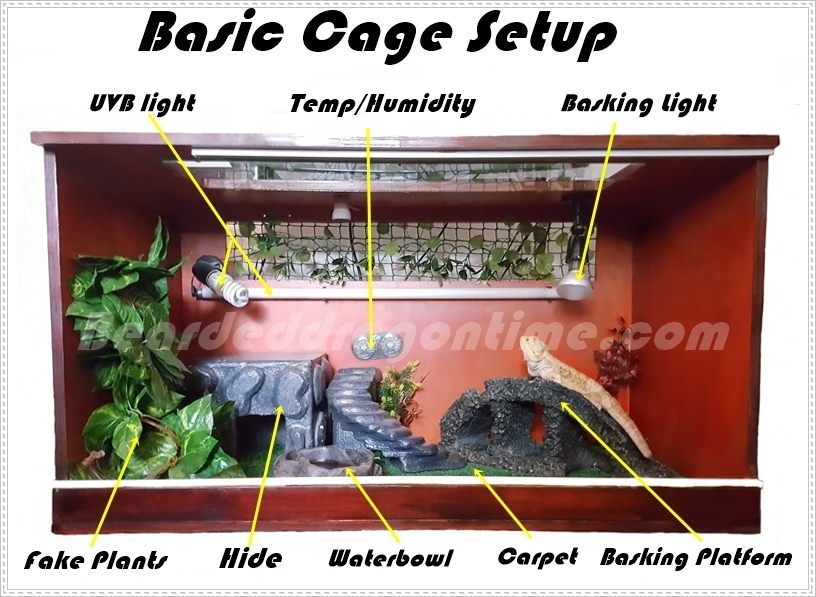 Bearded Dragon Care For Beginners Bearded Dragon Cages Terrariums What Is The Best
