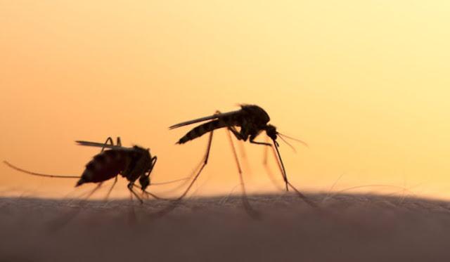 Ποιες περιοχές της Ελλάδας μπαίνουν σε καραντίνα λόγω ελονοσίας!