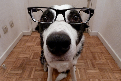 20 Cute Dogs With Glasses Amazing Creatures