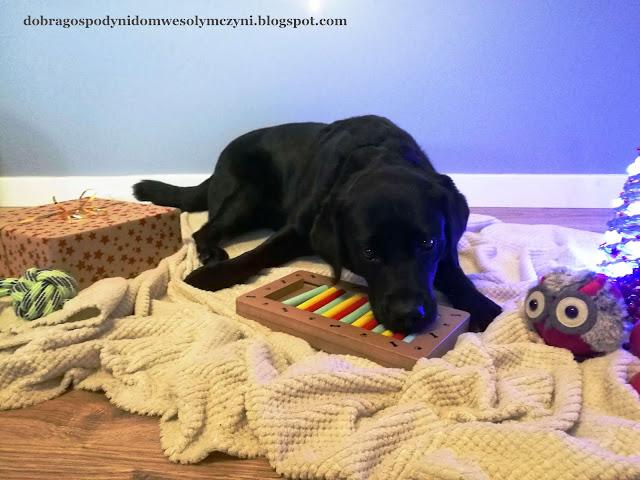 pies i zabawka interaktywna