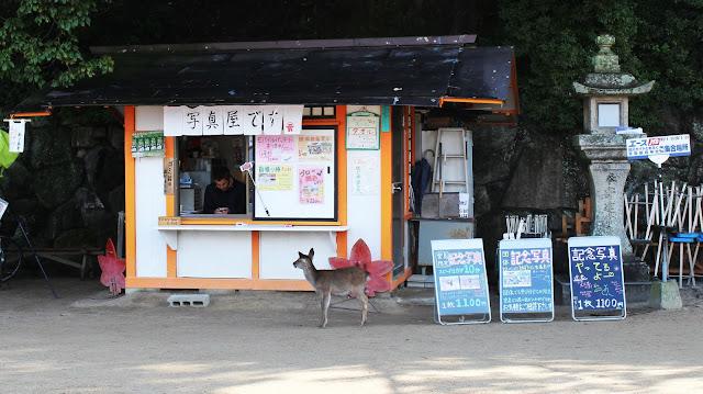Miyajima Island - Shika