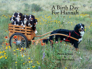 A Birth Day for Hannah, A birthday for hannah