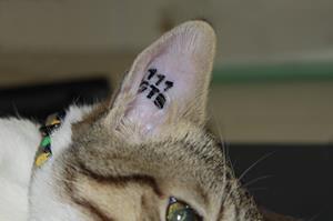 La Societe De Protection Animale Dieppoise Identification Des Chiens Et Des Chats