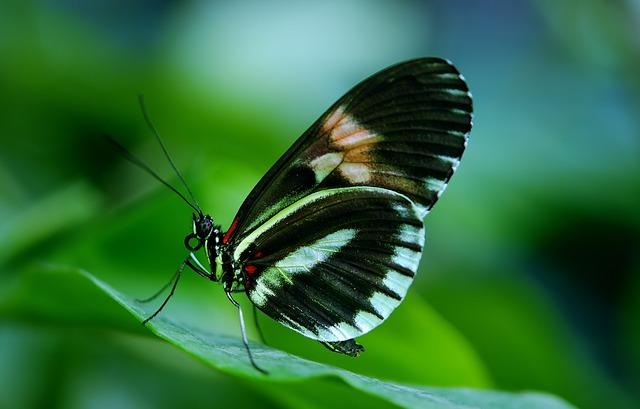 Kemenuh Butterfly Park Tourist Spot - Kemenuh, Bali Butterfly Park