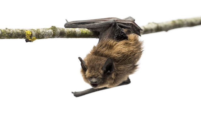 Prehistoric ancestor of leukaemia virus found in bats