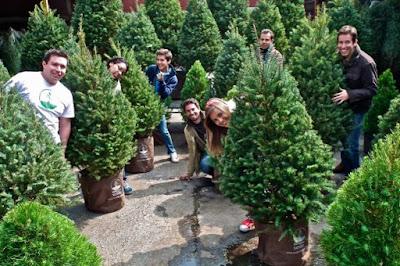 Recicla pinos
