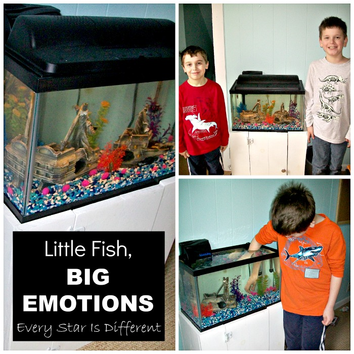 Little Fish, Big Emotions