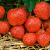 Strawberry delightful and valuable organic product