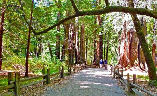 Passeio pelo Big Basin Redwoods State Park em Santa Cruz