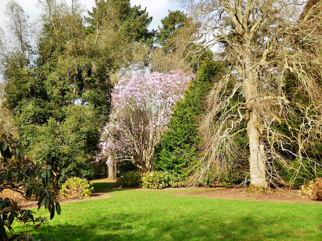 Gardens at Trelissick House, Cornwall