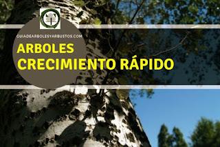 Arboles y arbustos de crecimiento rápido para el bosque de alimentos