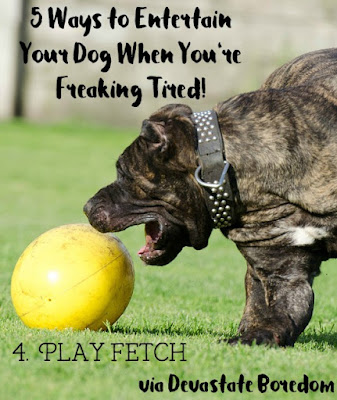I wish I had known these when Kaylee was a puppy!  SO smart, and easy.  #4 Play Fetch with a treat ball! - 5 simple, minimal-effort ways to exercise your dogs when It's raining, hot out, or you're sick / pregnant / just freaking tired!  How to entertain a puppy without exhausting yourself in the process...