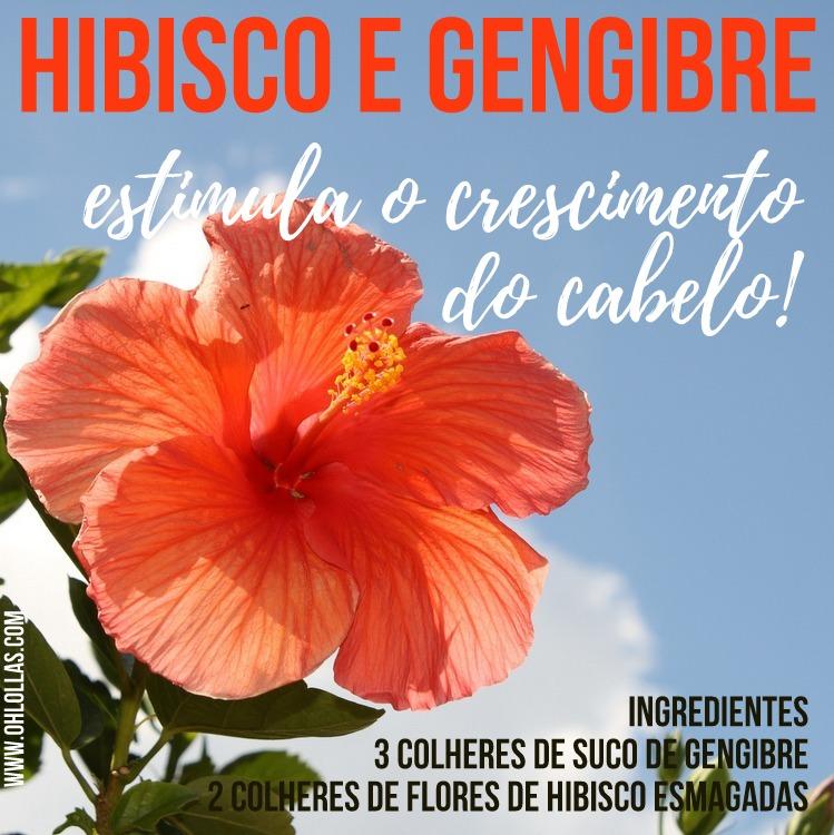Ingredientes: Flores de hibisco e gengibre