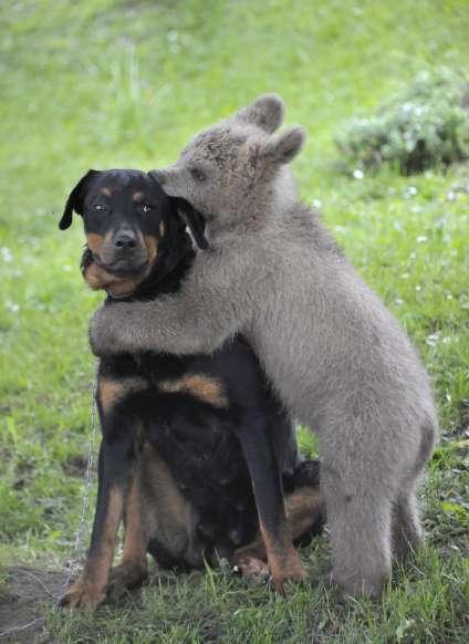 O Adorável Convívio na Vida Animal