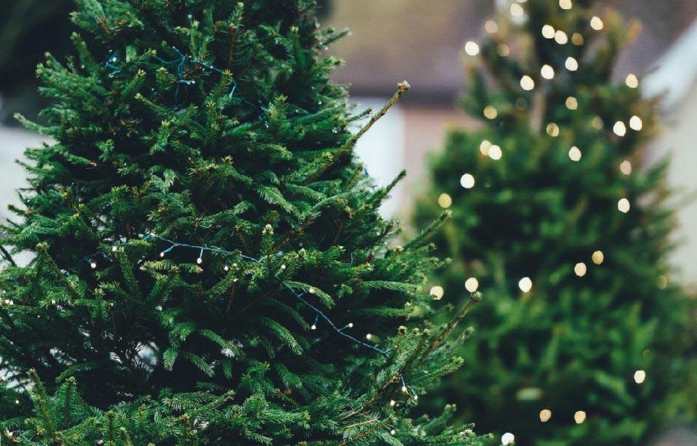 Tutto quello che occorre sapere prima di acquistare un albero di Natale