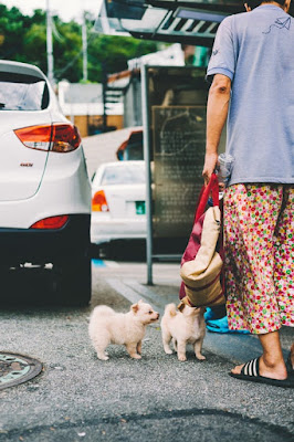 Puppy Socialisation Ideas