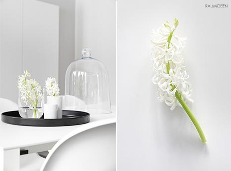 Hyazinthen in der Vase - Blumendeko für den Winter