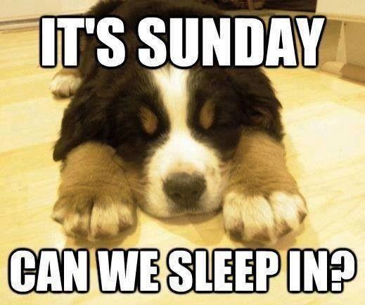 funny Sunday dog memes