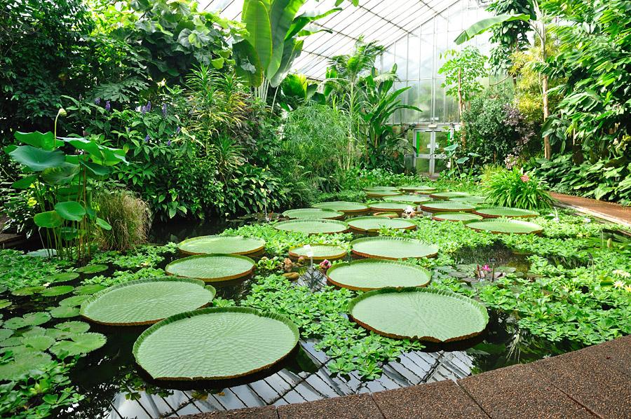 La flora y sus clases for Proyectos de jardines