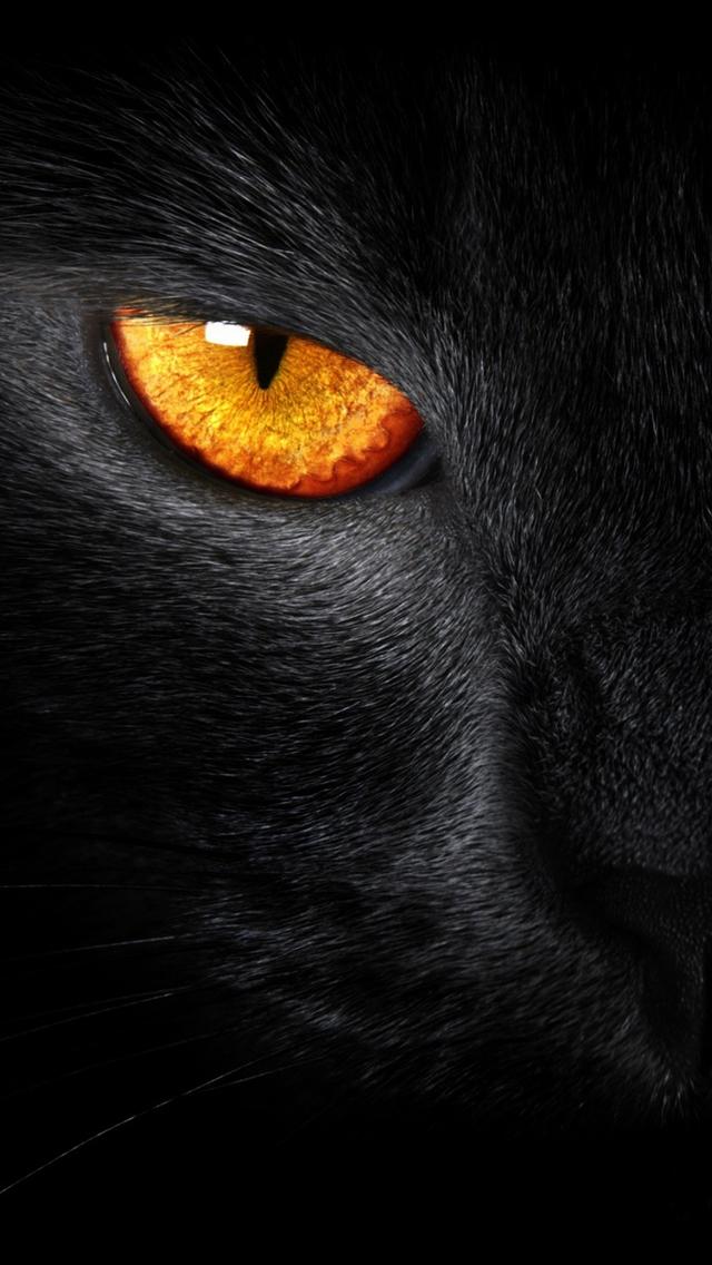 Black Panther Wallpaper Iphone 5 Free Wallpaper Phone