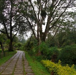 Blossom Hydel Park in Munnar