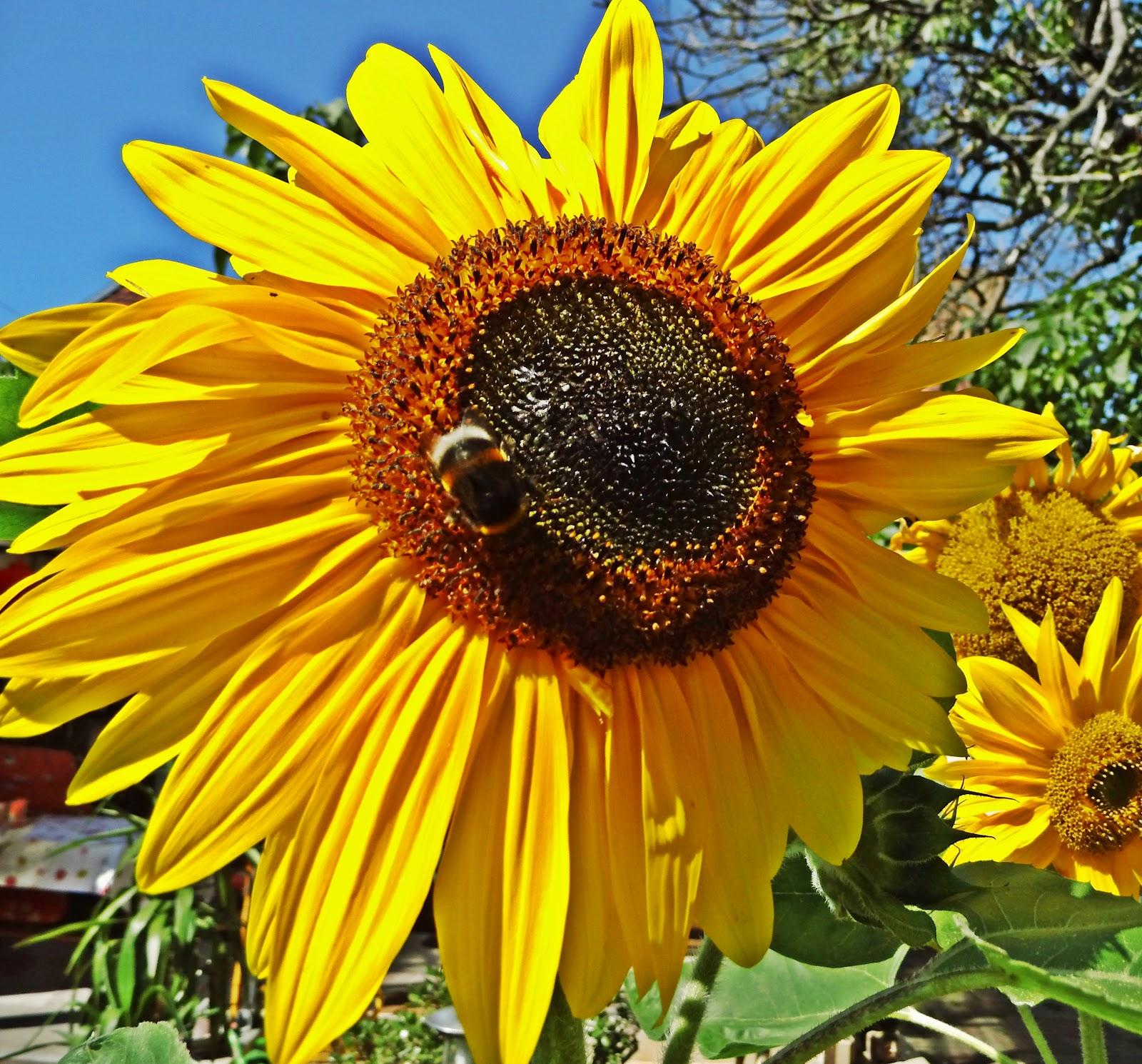 Schatten Blumen im August