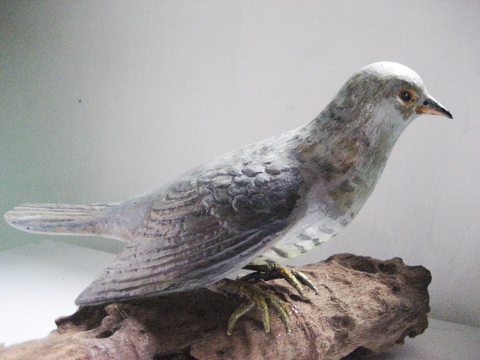 先飛: 臺灣鳥類