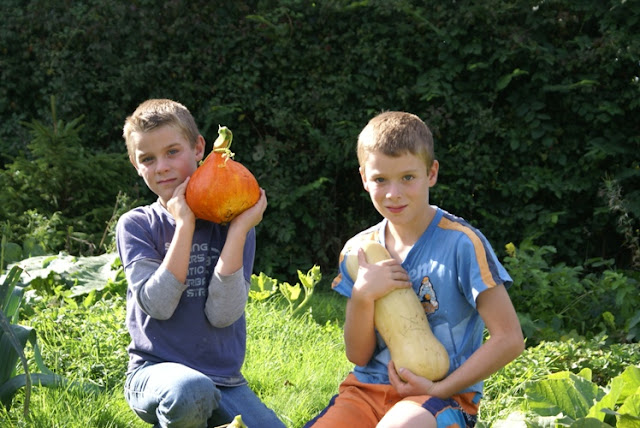 Harvesting pumpkins with my family