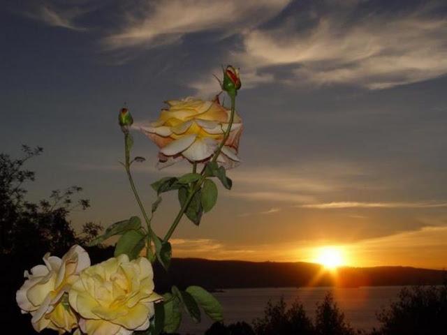 A Paz Que Trago Em Meu Peito é Diferente Da Paz Que Eu: Blog Da Paraguassu: A PAZ QUE TRAGO EM MEU PEITO