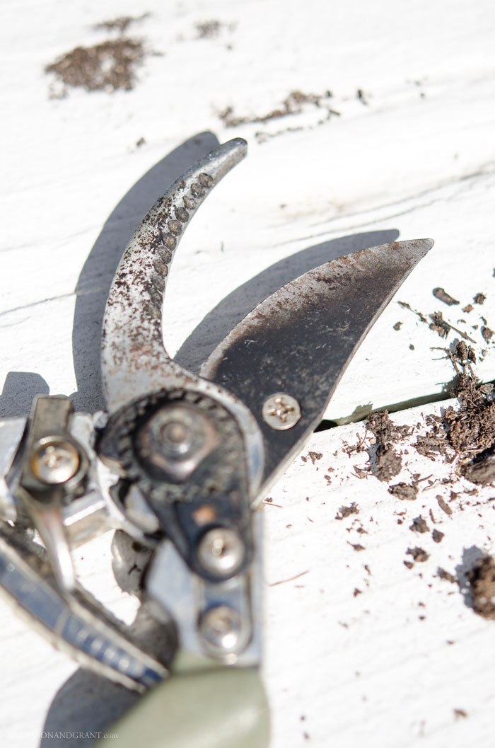 Keeping your garden tools sharp is important for the health of your garden and landscaping.   Find out about one simple gadget you can use to effortlessly maintain a sharp blade.  |  www.andersonandgrant.com