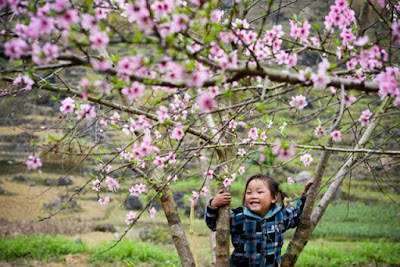 Sapa child and the Spring