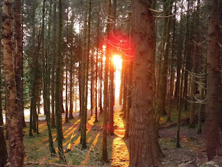 setting sun shining through forest trees