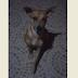 Cachorro é esfaqueado e depois tem corpo queimado na cidade Patos
