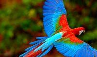 sfondi uccelli windows 8.1