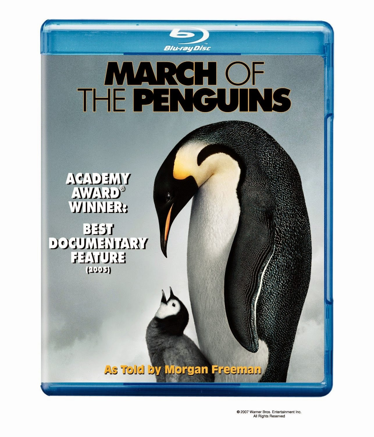 March of the Penguins for Bird Theme Homeschool Preschool Unit
