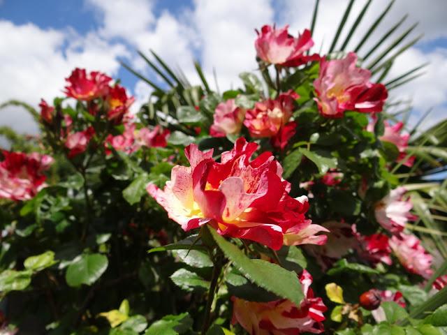 joli mois de mai, le jardin fait à son gré - Page 4 DSC07759