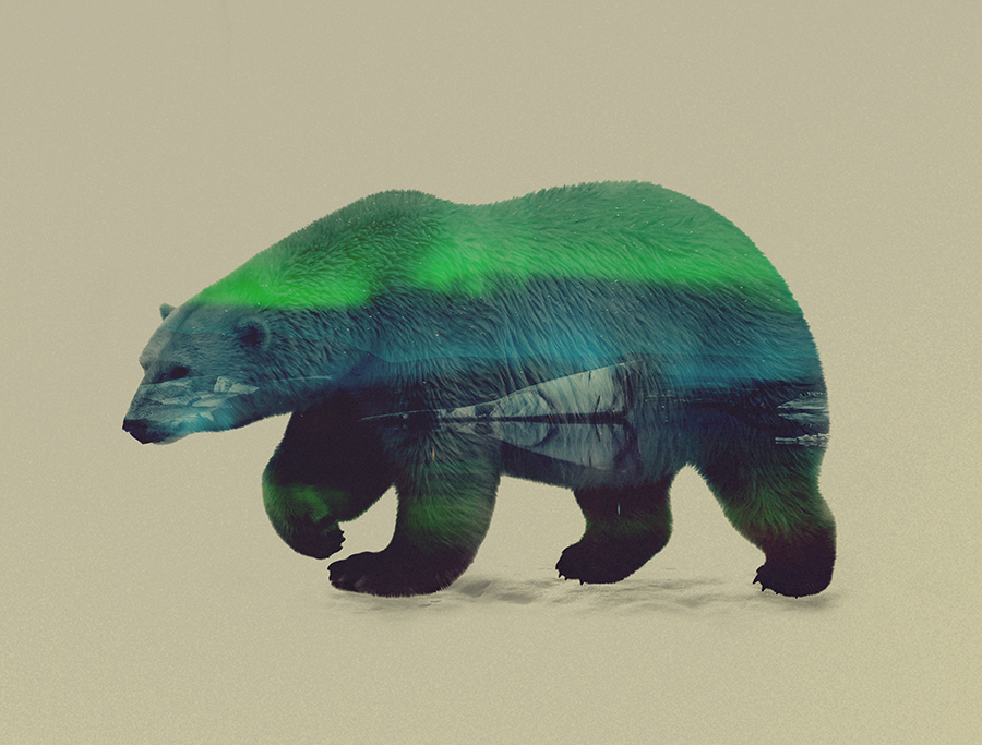 09-Polar Bear-Andreas-Lie-Animals-in-Photographic-Double-Exposures-www-designstack-co