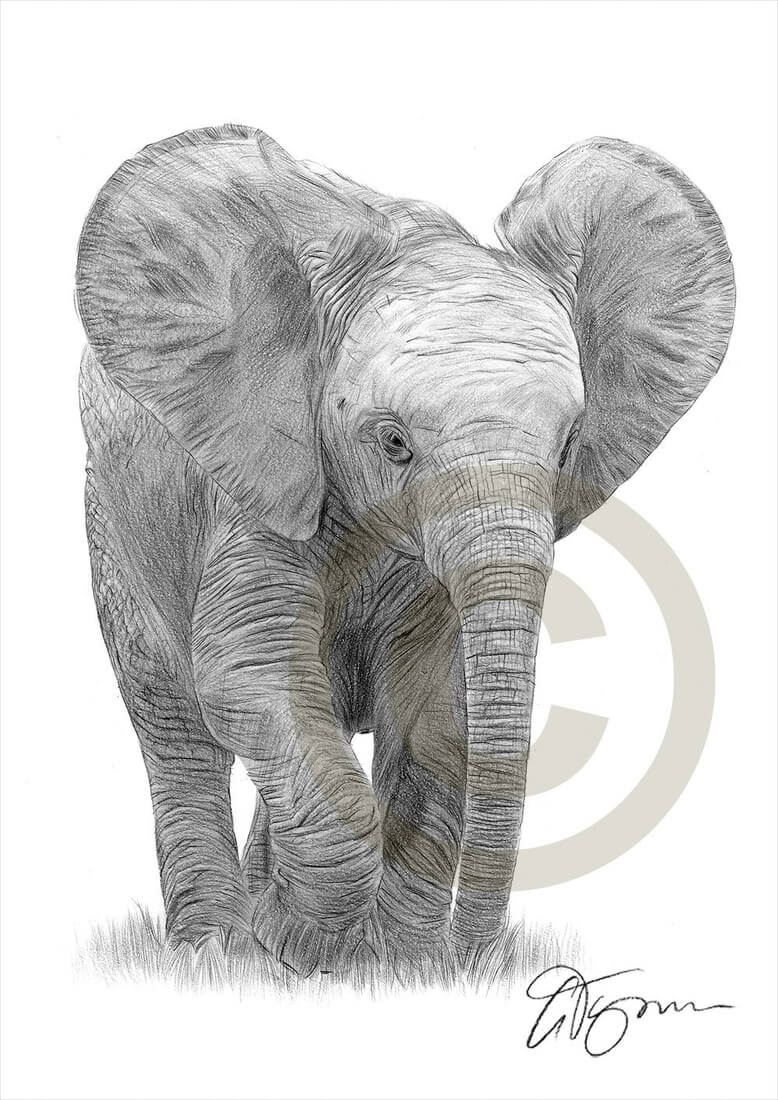 04-Baby-Elephant-Gary-Tymon-Wildlife-and-Domestic-Animal-Pencil-Drawings-www-designstack-co