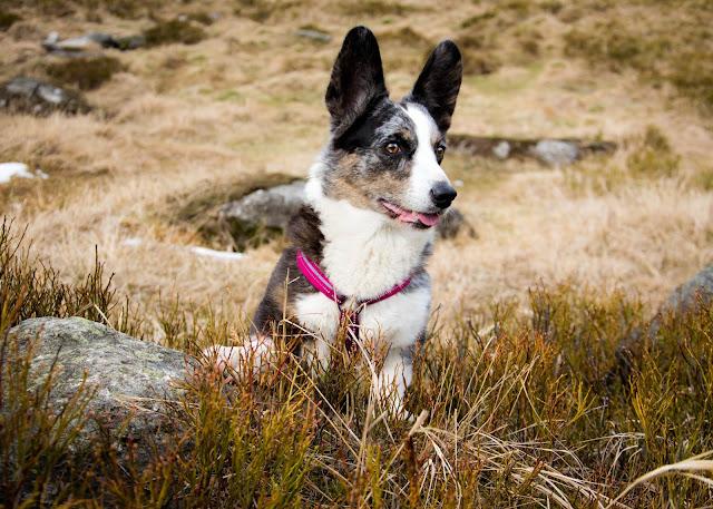 góry z psem, podróże z psem, pies w górach