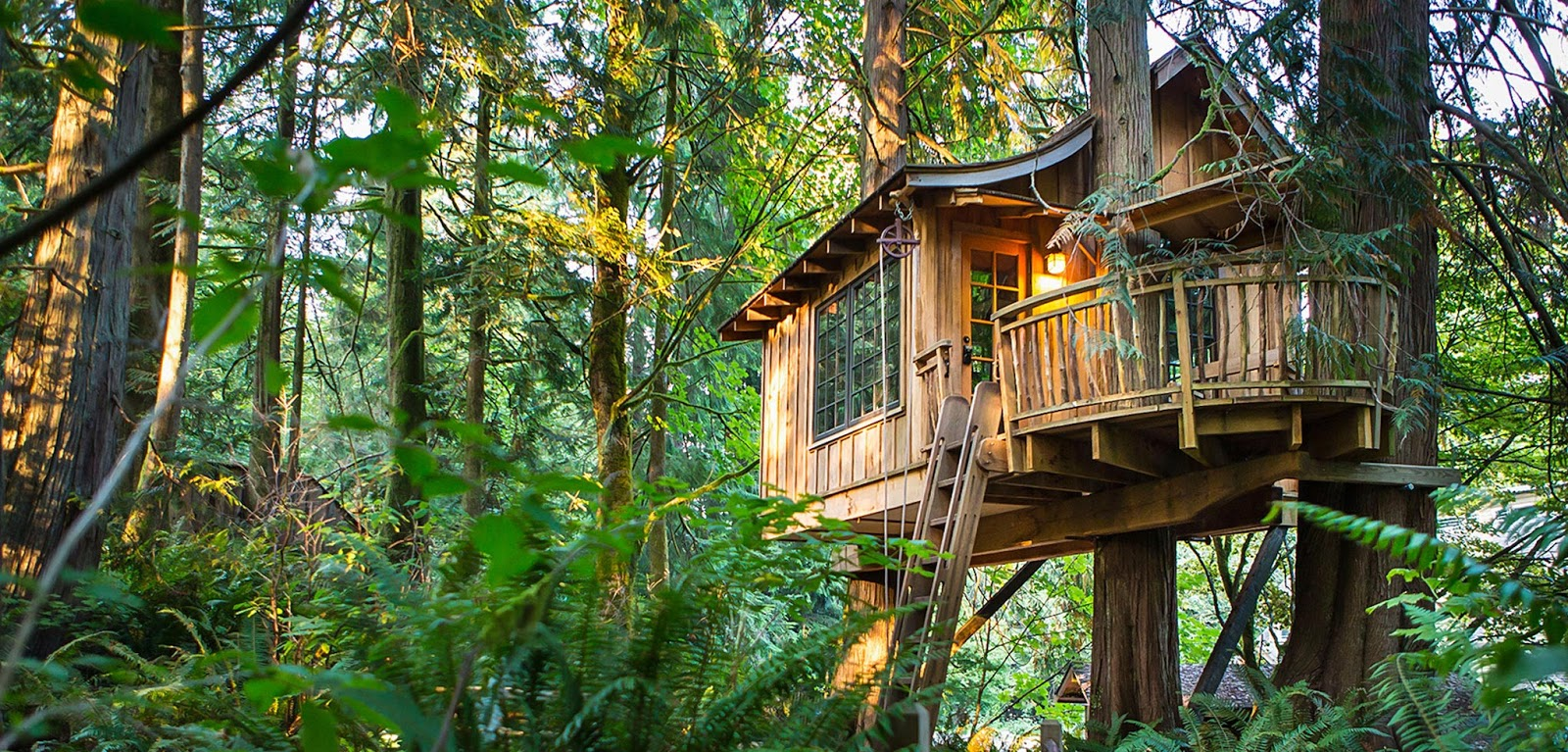 The best tree house hotels from around the world