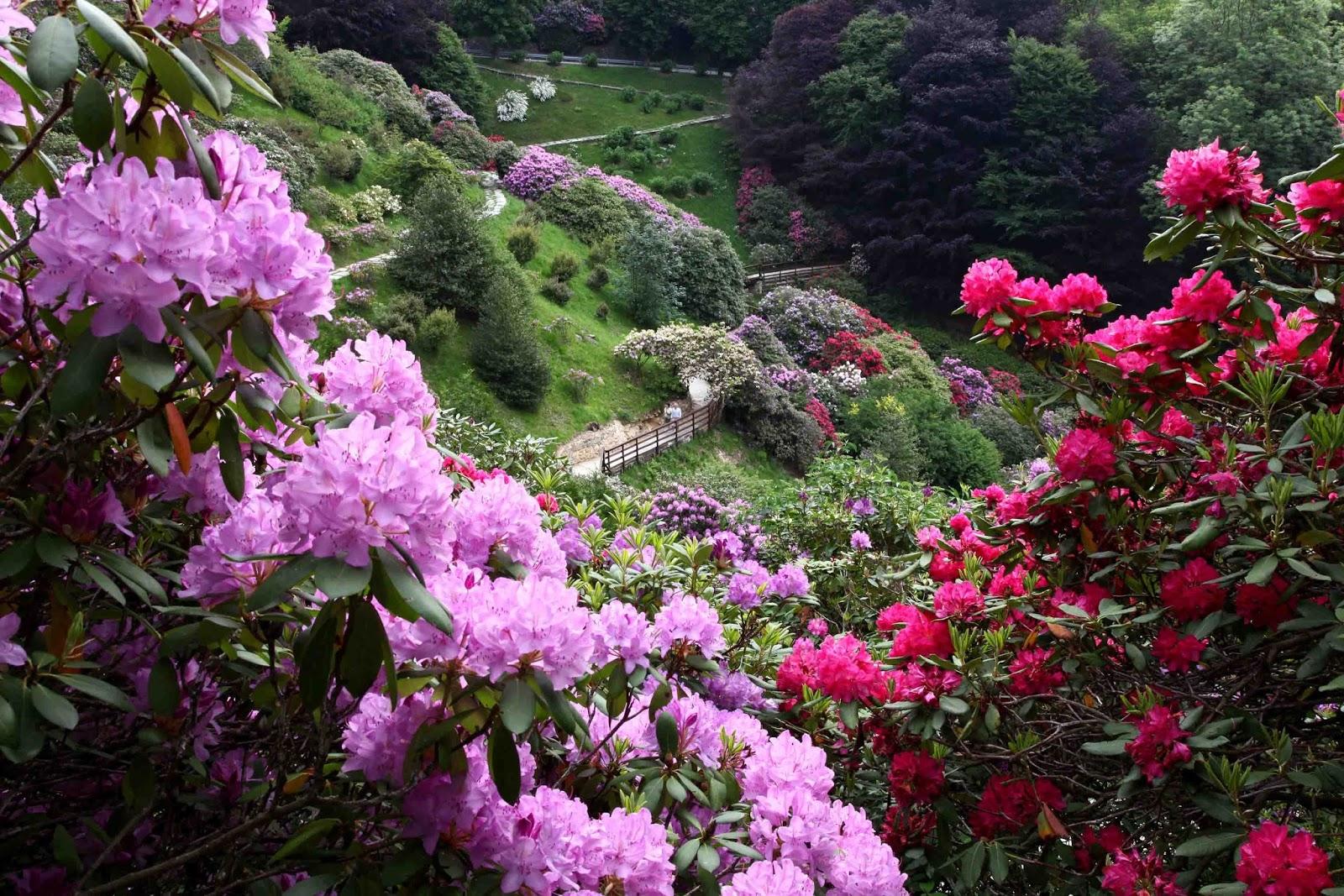 LOMBARDIA Giardino Botanico Heller (Gardone Riviera 5e30ef39025