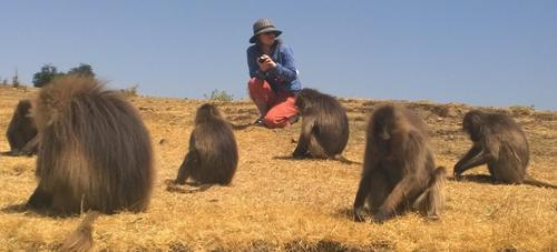 Janine and Baboons