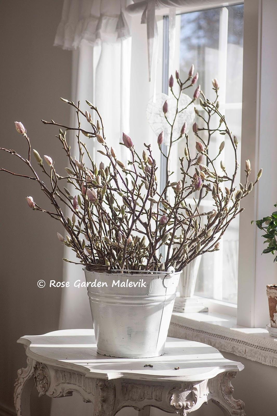 Rose garden malevik: fördriv blommande kvistar inomhus ~ flowering ...