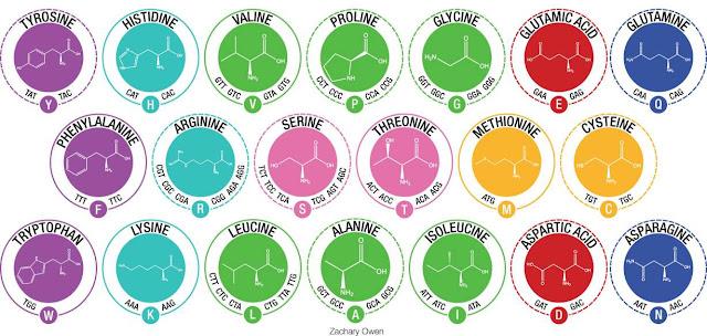 Aminoacidos y biologia