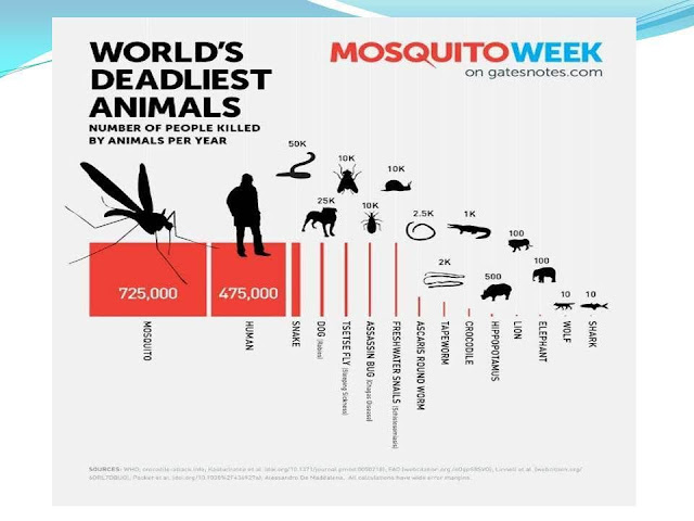 Worlds-Deadliest-Animals.jpg