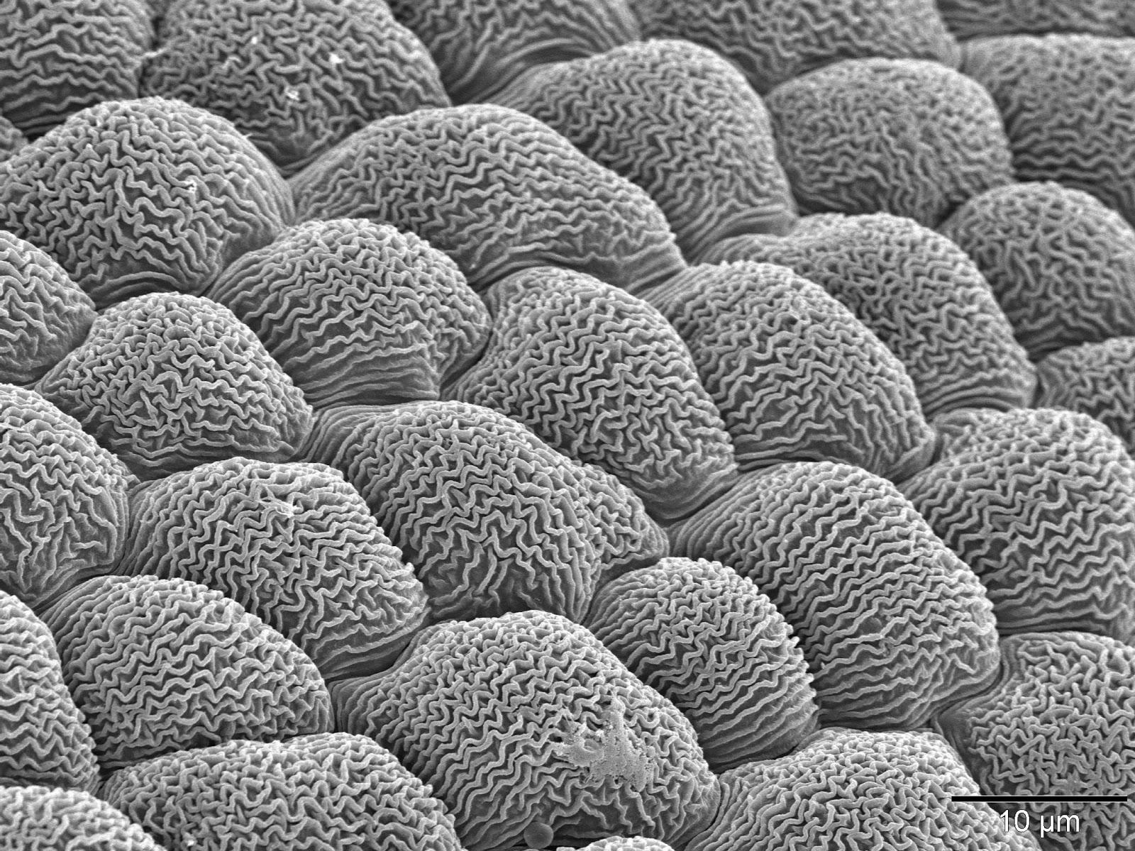 Tarım Siteniz: Mikro Gözüyle Bitkiler(Micro Perspective ...