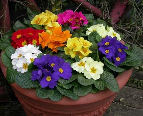 cveti komnatnierasteniya posadkaiuhod houseplants 屋内植物 室內植物 доторургамал نباتات داخلية 2